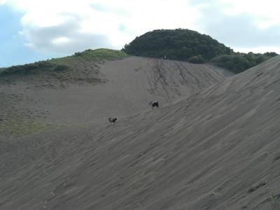 tateyamasuna1-1