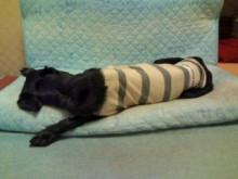 犬バカ日誌 -F1010124.jpg