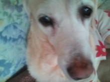 犬バカ日誌 -F1010144.jpg