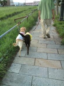犬バカ日誌 -F1010263.jpg
