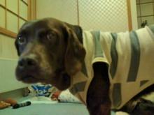犬バカ日誌 -F1010286.jpg