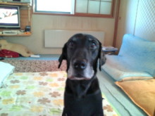 犬バカ日誌 -F1010295.jpg