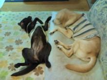 犬バカ日誌 -F1010304.jpg