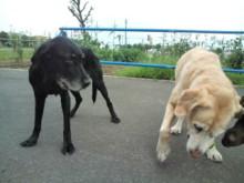 犬バカ日誌 -F1010331.jpg
