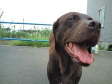 犬バカ日誌 -F1010332.jpg