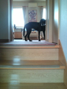 犬バカ日誌 -F1010334.jpg