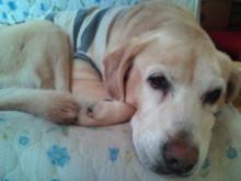 犬バカ日誌 -F1010341.jpg