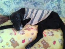 犬バカ日誌 -F1010345.jpg