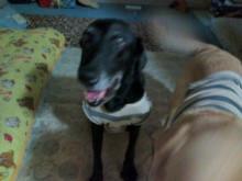 犬バカ日誌 -F1010346.jpg