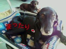 犬バカ日誌 -F1010254.jpg