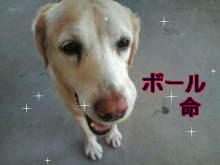 犬バカ日誌 -F1010253.jpg