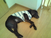 犬バカ日誌 -F1010261.jpg
