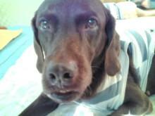 犬バカ日誌 -F1010262.jpg