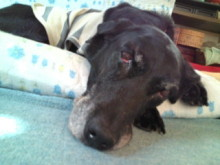 犬バカ日誌 -F1010275.jpg