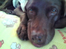 犬バカ日誌 -F1010276.jpg
