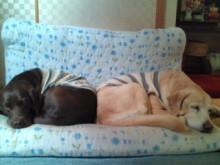 犬バカ日誌 -F1010288.jpg