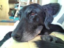 犬バカ日誌 -F1010289.jpg