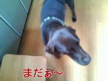 犬バカ日誌 -F1010302.jpg