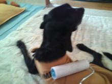 犬バカ日誌 -F1010307.jpg