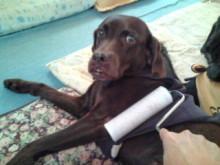 犬バカ日誌 -F1010306.jpg