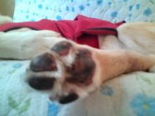 犬バカ日誌 -F1010296.jpg