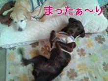犬バカ日誌 -F1010315.jpg