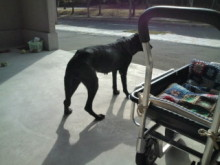 犬バカ日誌 -F1010359.jpg