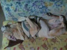 犬バカ日誌 -F1010395.jpg