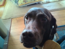 犬バカ日誌 -F1010411.jpg