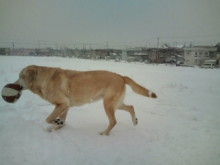 犬バカ日誌 -F1010427.jpg