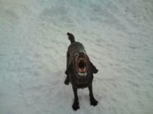 犬バカ日誌 -F1010449.jpg