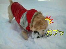 犬バカ日誌 -F1010453.jpg