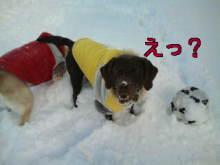 犬バカ日誌 -F1010454.jpg