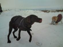 犬バカ日誌 -F1010380.jpg