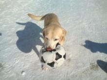 犬バカ日誌 -F1010385.jpg