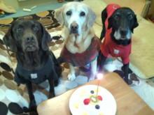 $犬バカ日誌 -ケーキで記念撮影