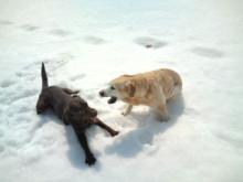 犬バカ日誌 -F1011467.jpg
