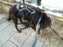 犬バカ日誌 -F1011409.jpg