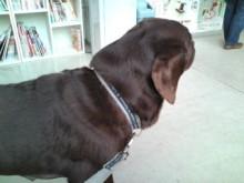 犬バカ日誌 -F1011449.jpg