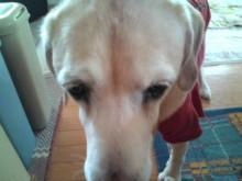 犬バカ日誌 -F1011455.jpg