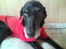 犬バカ日誌 -F1011473.jpg