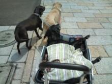 犬バカ日誌 -F1011477.jpg