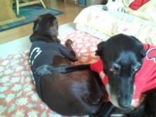 犬バカ日誌 -F1011475.jpg