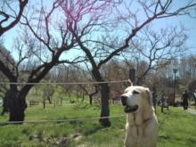 犬バカ日誌 -F1011504.jpg