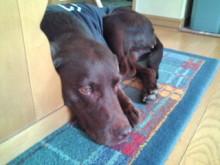犬バカ日誌 -F1011510.jpg