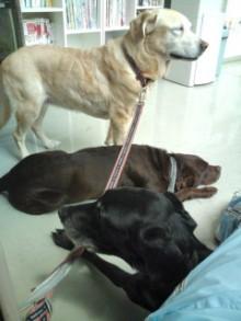 犬バカ日誌 -F1011439.jpg