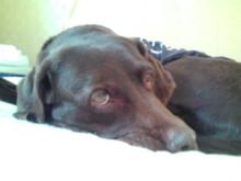 犬バカ日誌 -F1011433.jpg