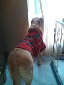 犬バカ日誌 -F1010368.jpg