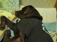 犬バカ日誌 -F1011448.jpg