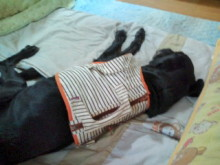 犬バカ日誌 -F1011471.jpg